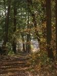 Intake Wood.jpg